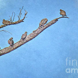 Mourning Doves by Gary Richards