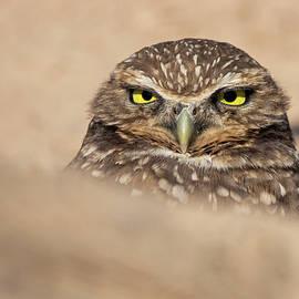 Mr. Grumpy by Sue Cullumber