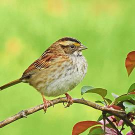Mr. Songbird by Carmen Macuga