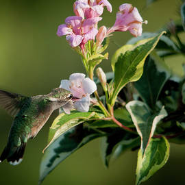 Ms Hummingbird Has a Lovely Meal by Lieve Snellings