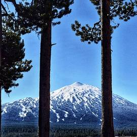 Mt. Bachelor Through the Trees by Dana Hardy