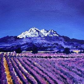 Mt. Shasta and the Lavender fields by Dawn Neumeister