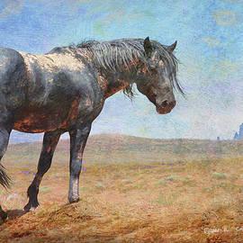 Muddy Black Stallion by R christopher Vest
