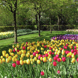 Multicolooured Tulips - Keukenhof Gardens by Kathryn Jones