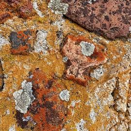Multicolored Lichen on Rock Wall by Jerry Abbott