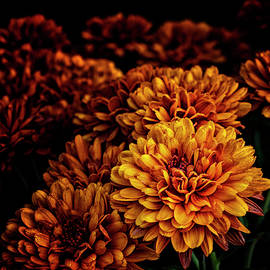Mums After The Rain by Denise Harty