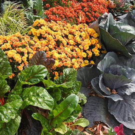 Mums and Fall Cabbages by Barbara Ebeling