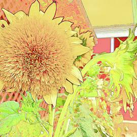 Munson Farms Sunflowers by Lorraine Baum
