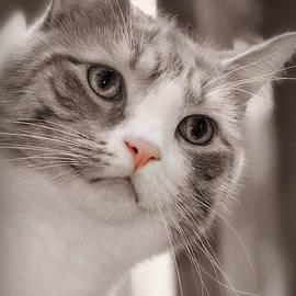 Murphy Cat Selective Color by Marilyn DeBlock