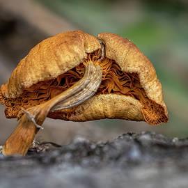 Mushroom by Morey Gers