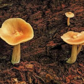 Mushrooms on Fallen Tree by Dennis Lundell