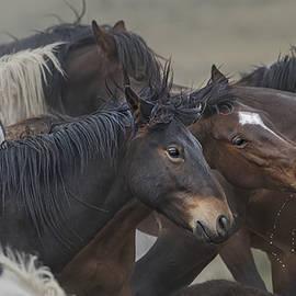 Mustangs in Wait. by Paul Martin