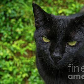 My Black Angel by Linda Howes