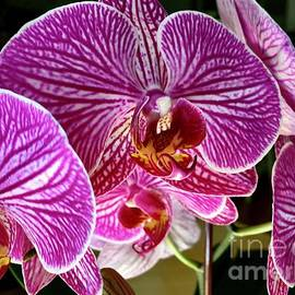 My Orchid Blooming Again 2021 by Eunice Warfel