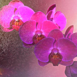 My Orchid by Susan Buscho