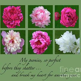 My Peonies by Maureen Tillman