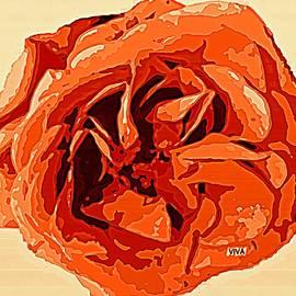 My Rose - Gloire Orange  by VIVA Anderson