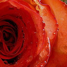 My Valentine - 1 by Arlane Crump