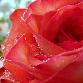 My Valentine - 3 by Arlane Crump