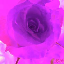 My Wild Violet Rose - Floral Photographic Art - Roses as Art - Flower Photography by Brooks Garten Hauschild