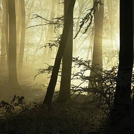 Beautiful sun light rays in frozen winter by Dane Walker