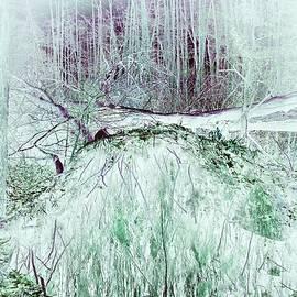 Mysterious Forest #6 by Slawek Aniol