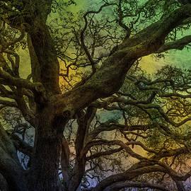 Mysterious Oak Variation 2 by Lorraine Baum