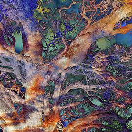 Mysterious Oak Variation 3 by Lorraine Baum