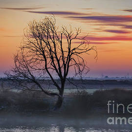 Mystic Morning by Mitch Shindelbower