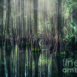 Mystical Cypress Swamp, Florida by Liesl Walsh