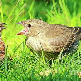 Nanny Bird by Atiqur Rahman