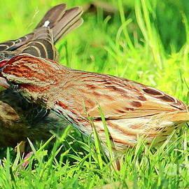 Nanny Sparrow by Atiqur Rahman