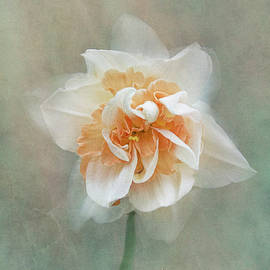 Narcissus Bloom -  Vertical Texture by Patti Deters