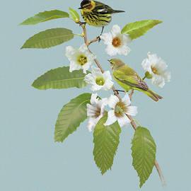 Nashville Warblers in Chestnut Tree by Spadecaller
