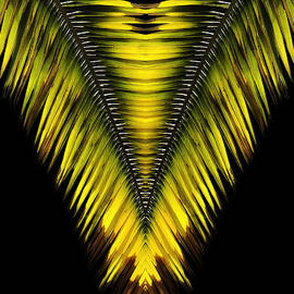 Nature-in-Abstract Palm Frond by Mike Nellums