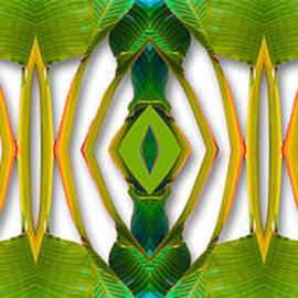 Nature-in-Abstract Traveler's Palm by Mike Nellums