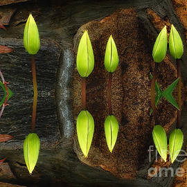 Nature-in-Abstract Tulip Buds by Mike Nellums