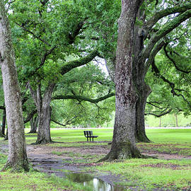 Nature Oak Trees setting in New Orleans  by Chuck Kuhn