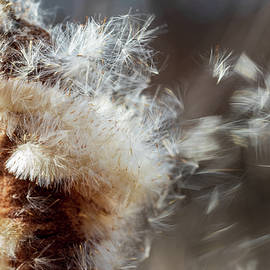 Nature Photography - Cattail In The Wind by Amelia Pearn
