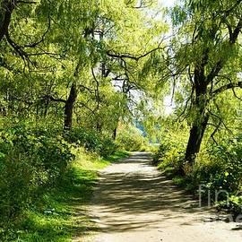 Nature Trail No. 9 by Maria Faria Rodrigues