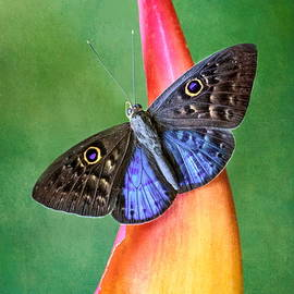 Natures Gift by Susan Hope Finley