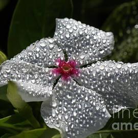 Natures Glitter by Joy Watson