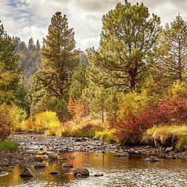 Nature's Quietude ... by Judy Foote-Belleci