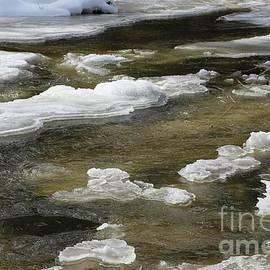 Natures River Art by Sandra Huston