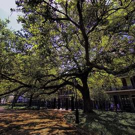 Nawlins Oak by Robert McCubbin