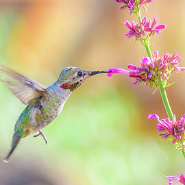 Nectar Kiss