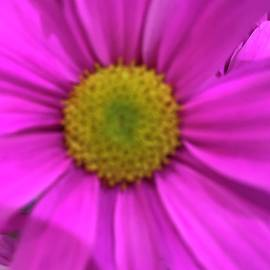 Neon Pink Daisy by Janet Padgett