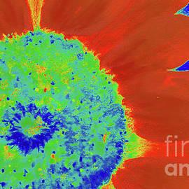 Neon Sun Flowers by Janie Easley Ballard