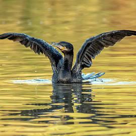 Neotropic Cormorant 6671-012021-2 by Tam Ryan