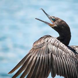 Neotropic Cormorant by Bonny Puckett